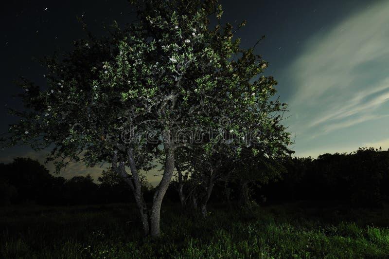 De boom van het maanlicht stock afbeelding