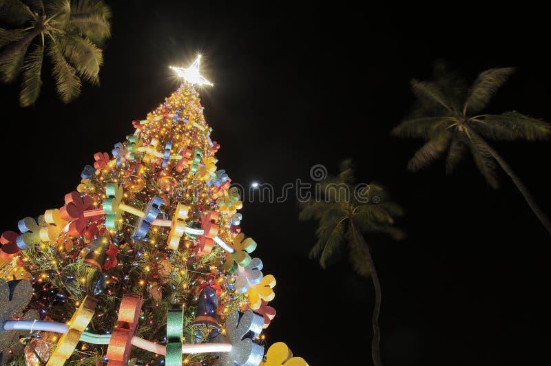 De boom van Honolulu Hale Christmas stock afbeelding