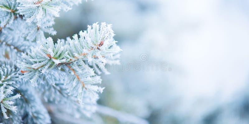 De Boom van de Kerstmisvakantie Winter Sneeuw Background Het blauwe nette, mooie Kerstmis en ontwerp van de de boomkunst van Nieu royalty-vrije stock afbeeldingen