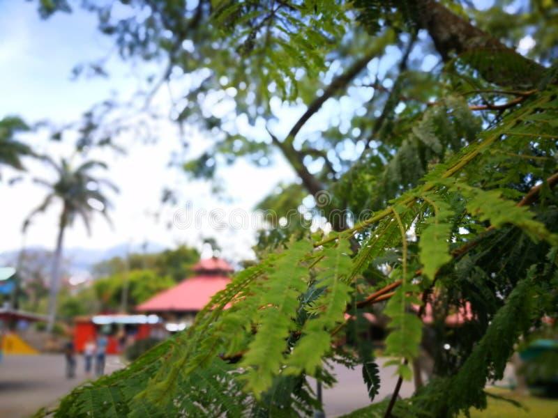 De boom van Nice stock fotografie