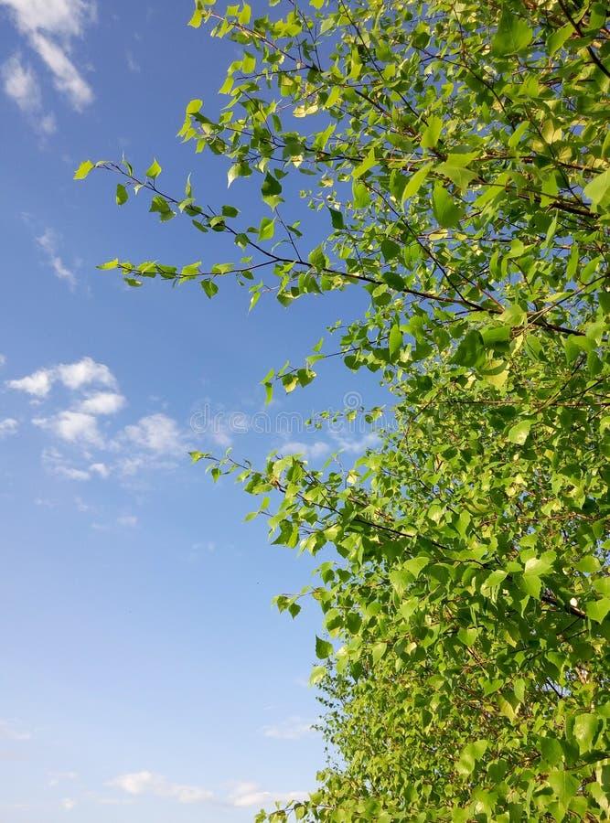 De boom van Nice royalty-vrije stock afbeelding