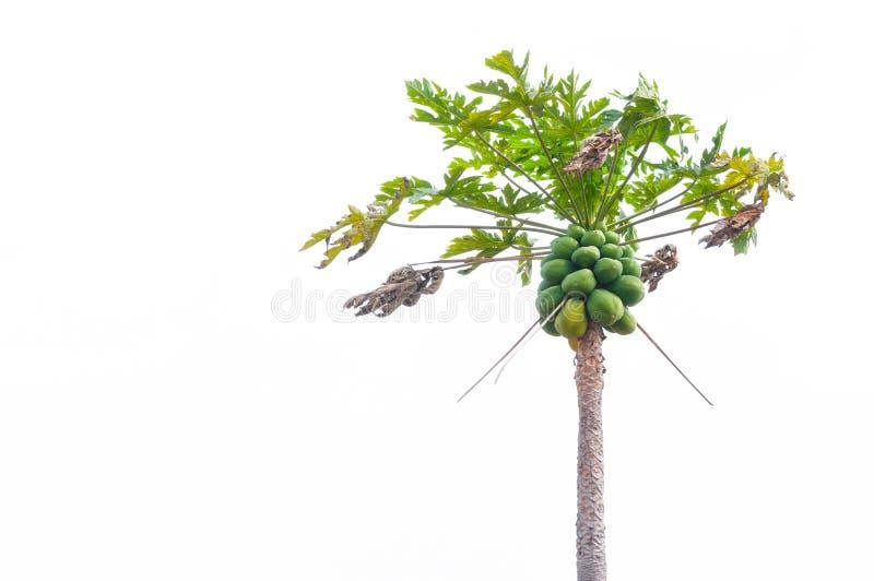 De boom van de papaja op wit wordt geïsoleerd stock foto