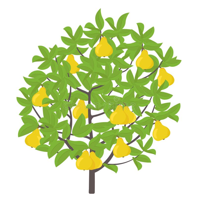 De boom van de peer Vector illustratie De installatie van de fruitboom r Rijpe peer op een boom Eetbaar fruit royalty-vrije illustratie