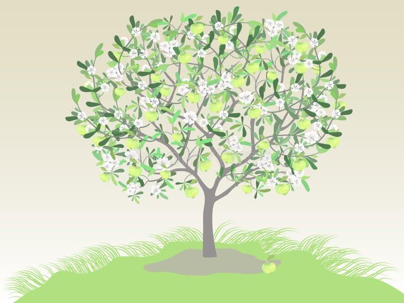 De boom van Spring_summer royalty-vrije illustratie