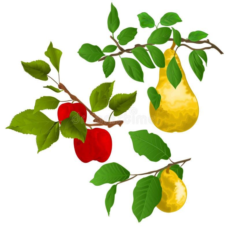 De boom van de takappel met rode appelen en tak van peren met gele rijpe peer op de witte vector van achtergrondwaterverfvitage i stock illustratie