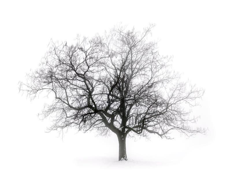 De Boom van de winter in Mist royalty-vrije stock afbeelding