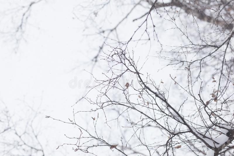 De boom van de winter Naakte takken Hemel stock afbeelding
