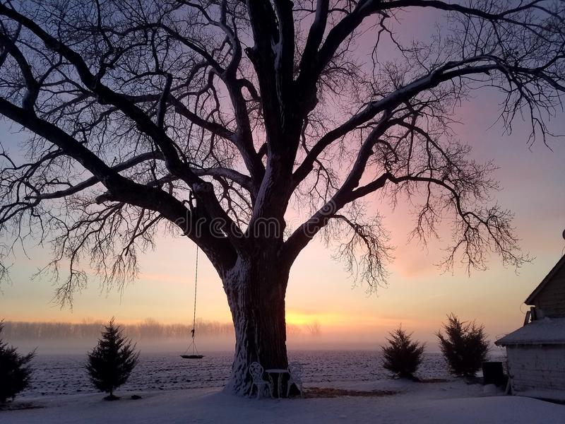 De boom van de zonsopgangmist royalty-vrije stock foto's