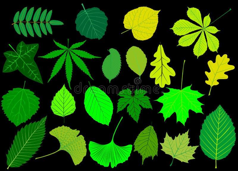 De boom verlaat groene reeks, vector illustratie
