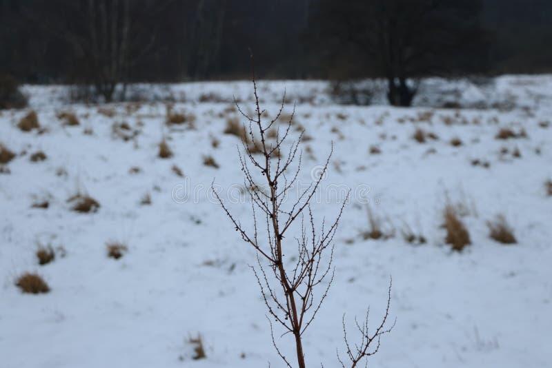 De boom vertakt zich aardsneeuw bokeh royalty-vrije stock afbeelding