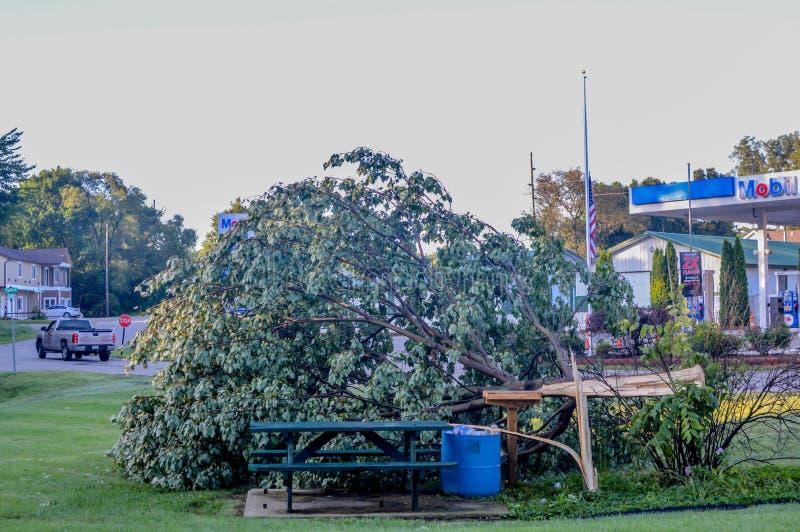 De boom viel in Park door Mobil in Microburst-Onweer royalty-vrije stock foto's