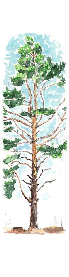 De de boom vroege lente van de de lentepijnboom - waterverfschets vector illustratie