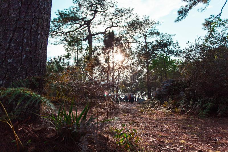 De boom was geboren op het bos stock fotografie