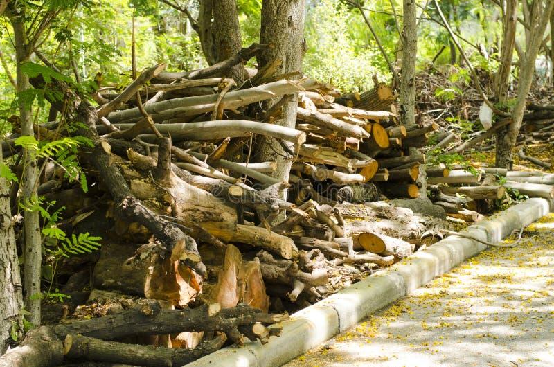 De boom werd gesneden samen onderaan de kant van de weg stock foto