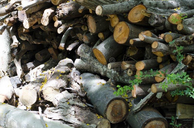 De boom werd samen gesneden stock afbeeldingen