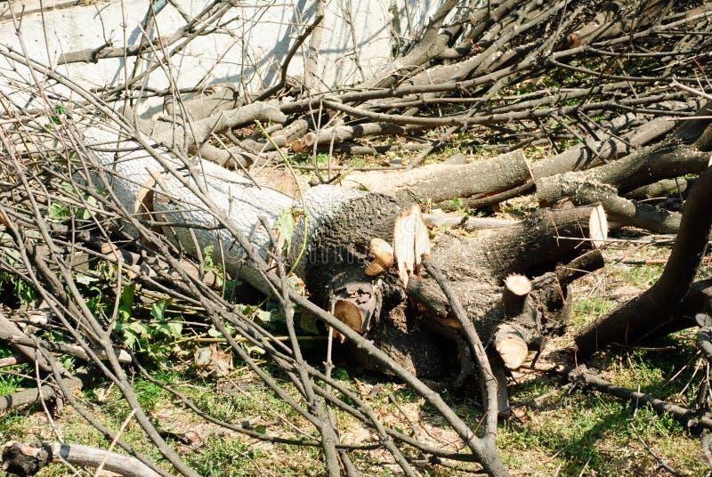De boom werd verminderd stock foto's