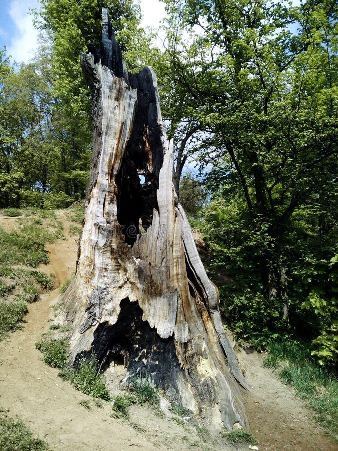 de boom wordt gewankeld door bliksem royalty-vrije stock afbeelding