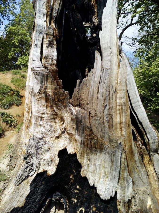 de boom wordt gewankeld door bliksem royalty-vrije stock foto's