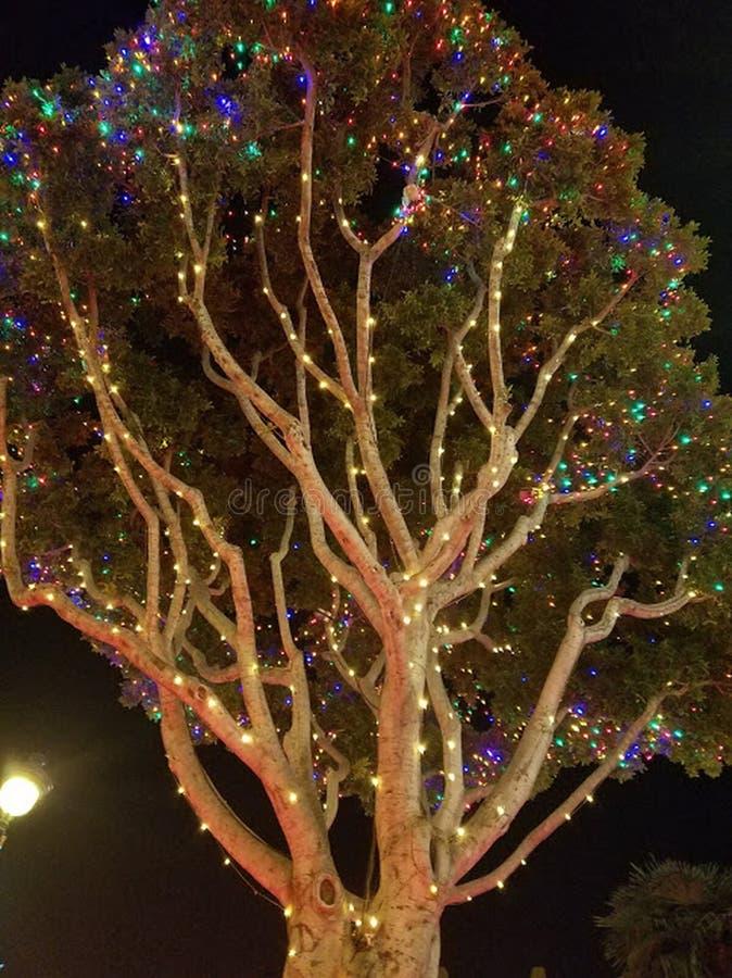 De boom wordt versierd met prachtig het gloeien lichten in disneyland stock foto