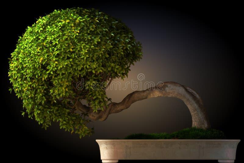 De boom zijaanzicht van de bonsai vector illustratie