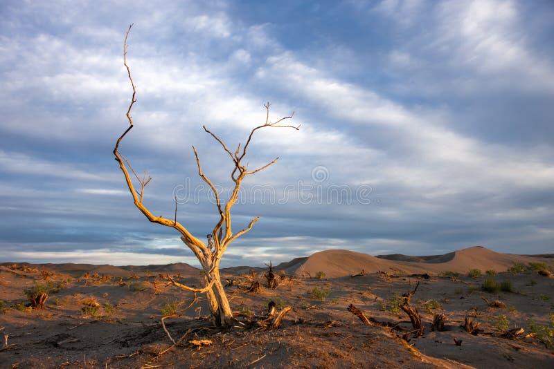 De boom zonnebaadde in gouden licht. royalty-vrije stock foto