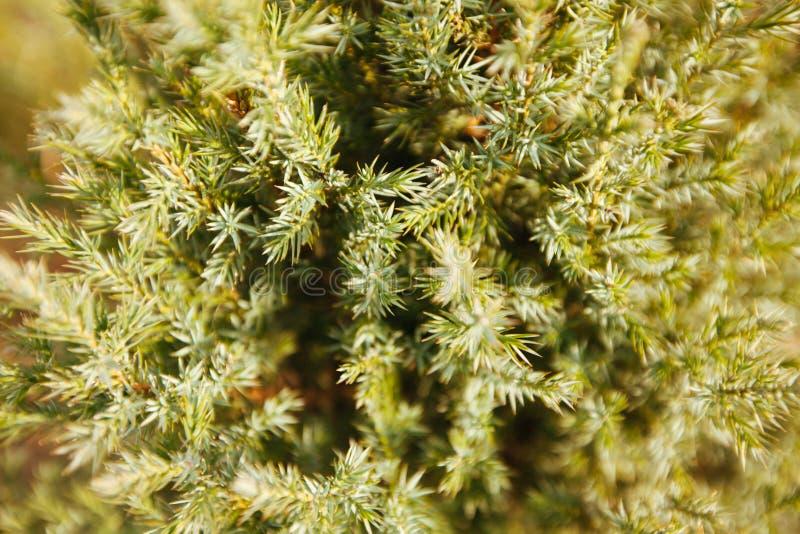 De boombehang van de Kerstmispijnboom stock fotografie