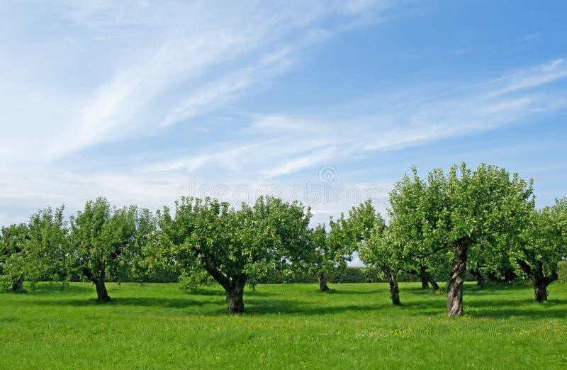 De boomboomgaard van de appel royalty-vrije stock fotografie
