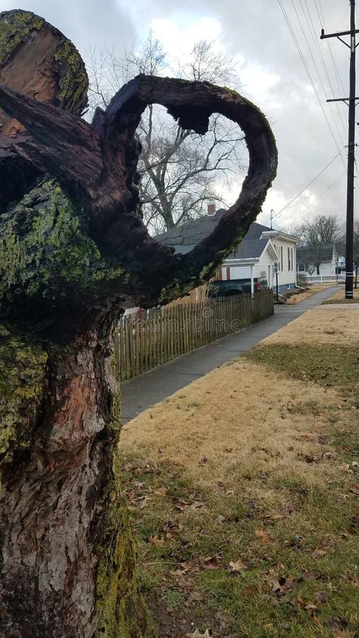 De boomboomstam vormt de vorm van een hart stock foto's