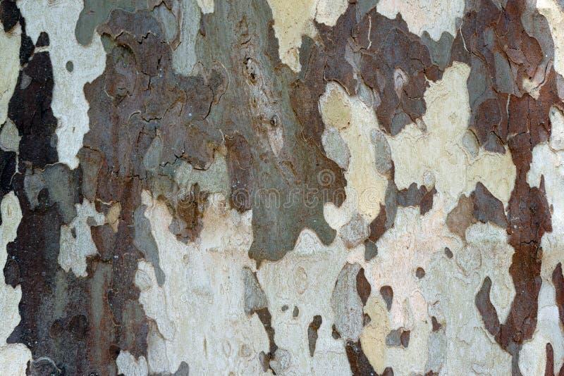 De boomclose-up van het schorsvliegtuig stock foto's