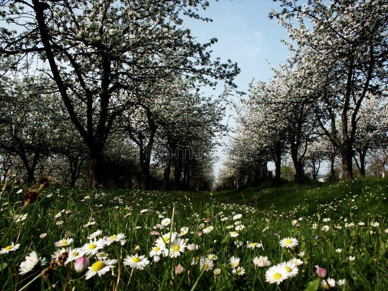 De boomgaard van appelen royalty-vrije stock afbeeldingen