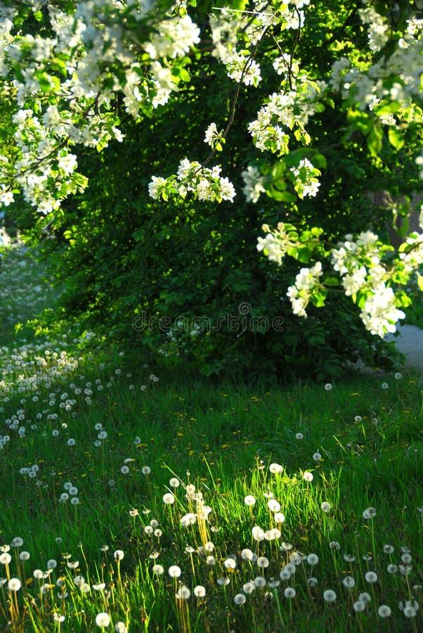 De boomgaard van de lente stock foto