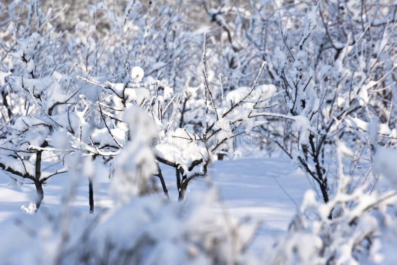 De boomgaard van het fruit in de winter stock afbeeldingen