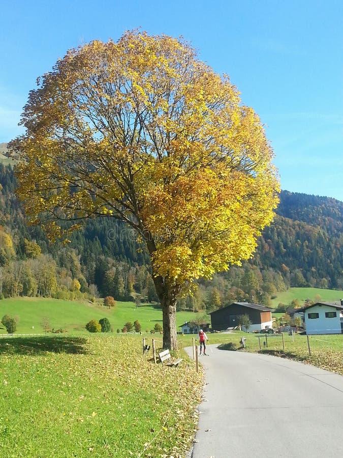 De boomherfst Oostenrijk stock foto