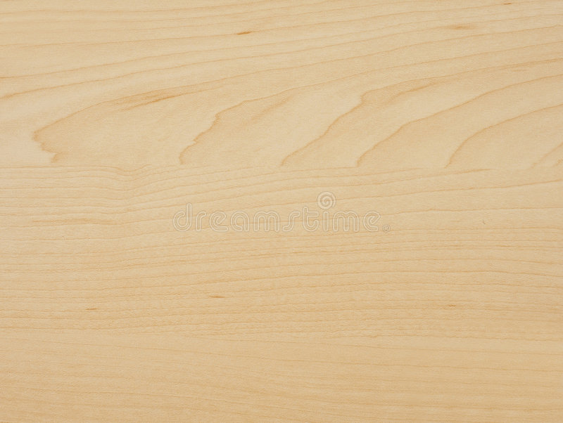 De boomhout van de esdoorn stock afbeelding