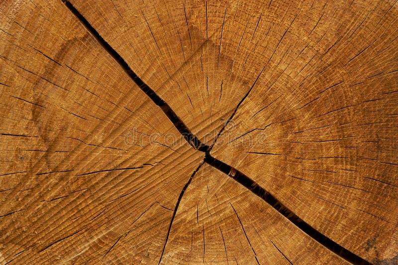 De boomlogboeken van de besnoeiing Close-up op boomringen en textuur stock foto