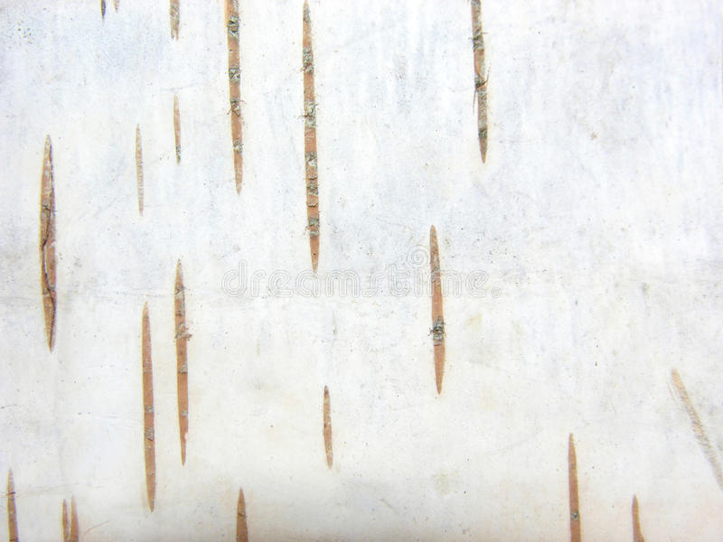 De boomschors van de berk royalty-vrije stock foto