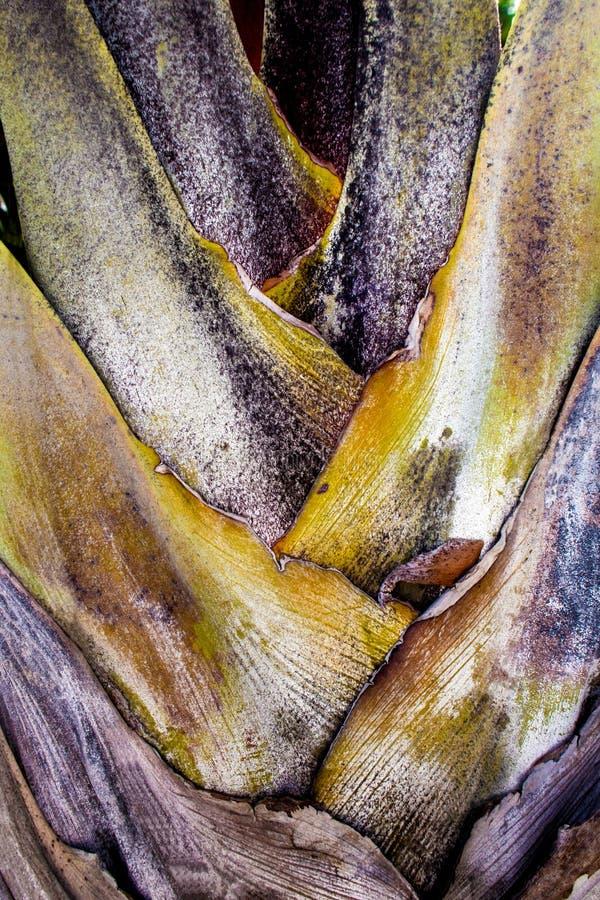 De boomstam en bracteebladeren van palm royalty-vrije stock afbeelding