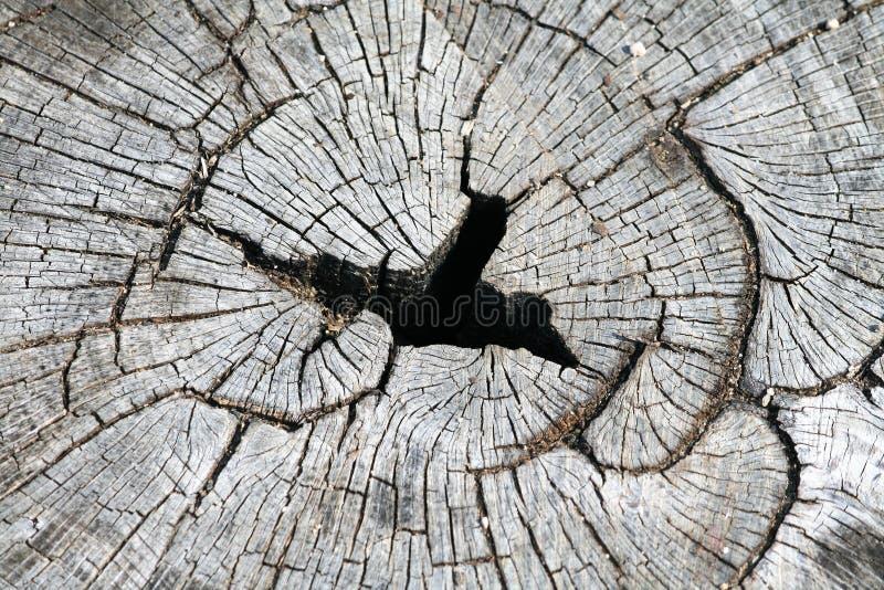 De boomstam van de besnoeiingsboom royalty-vrije stock fotografie