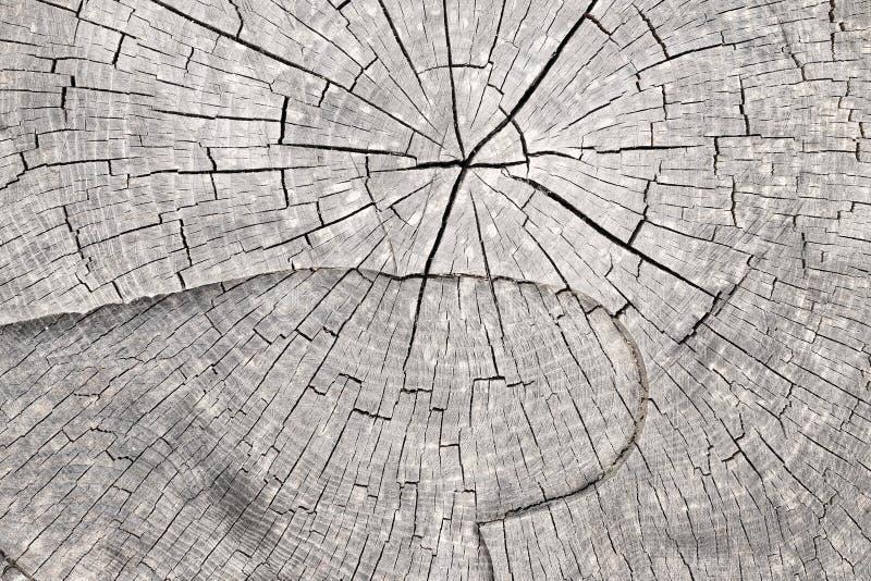 De boomstam van de besnoeiingsboom - ringvormige ringen royalty-vrije stock foto