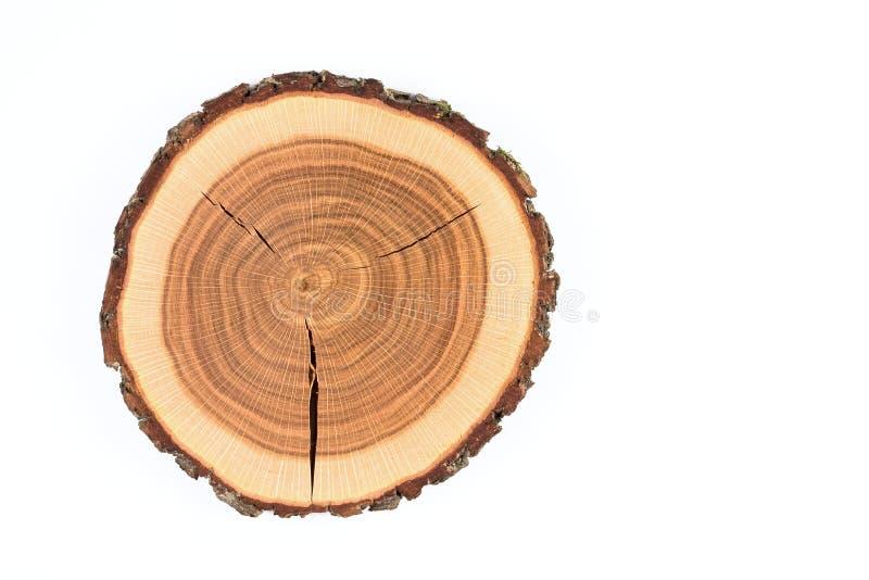 De boomstam van de boom stock foto