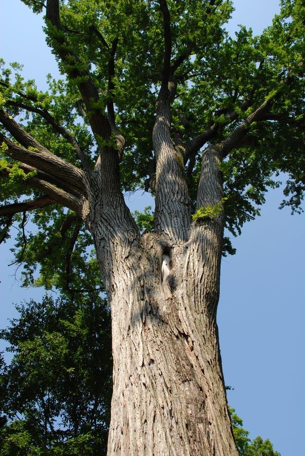 De boomstam van de boom royalty-vrije stock fotografie