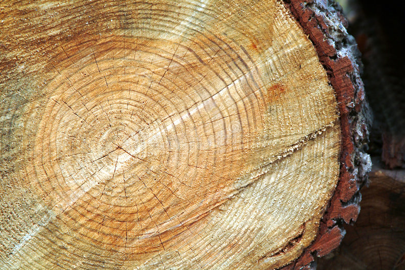 De boomstam van de boom na wordt gesneden royalty-vrije stock afbeeldingen