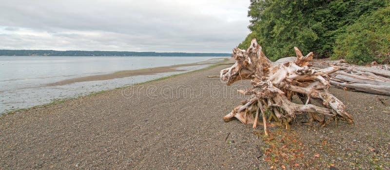 De boomstam van de het Park deadwood boom van de Staat van het Joemmastrand op kiezelsteenstrand at low tide stock foto's