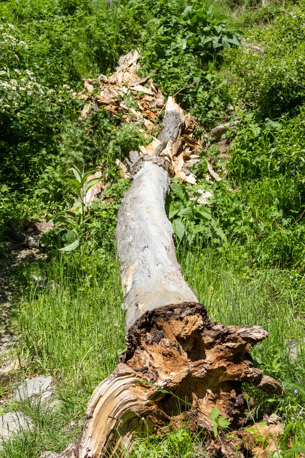 De boomstam van een grote gevallen boom onder het groene gras royalty-vrije stock afbeeldingen