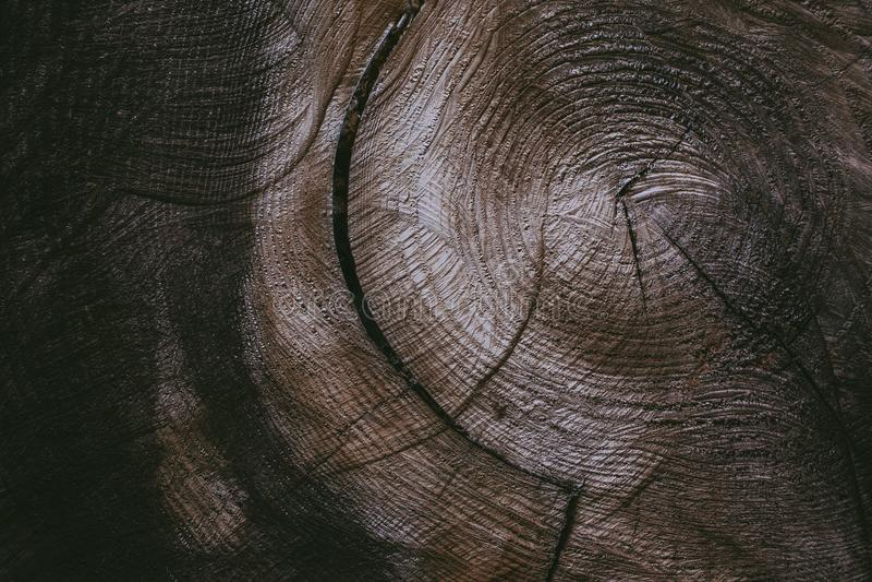 De boomstamachtergrond en textuur van de besnoeiingsboom Houten textuur van gesneden boomboomstam Close-upmening van oude houten  stock foto