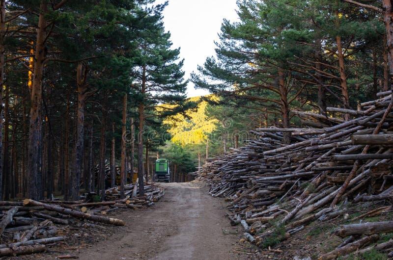 De boomstammen stapelden omhoog het wachten op om hen in korrels door een verpletterende vrachtwagen te veranderen stock afbeelding