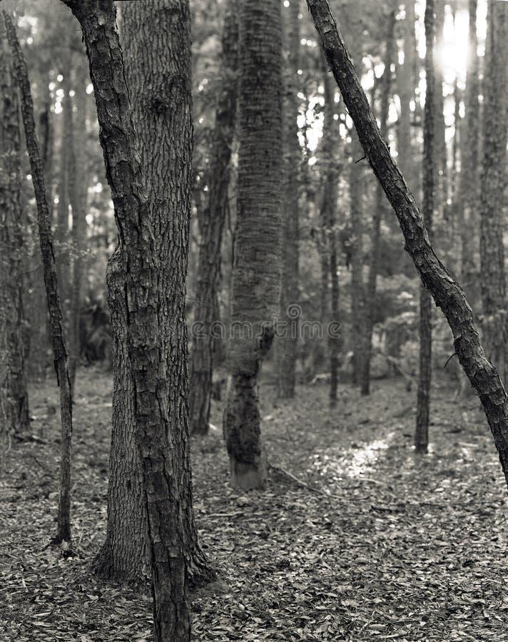 De boomstammen van de boom stock afbeeldingen