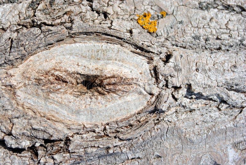 De boomstamschors van de espboom met geel mos, horizontaal achtergrondtextuur dicht omhooggaand detail stock foto
