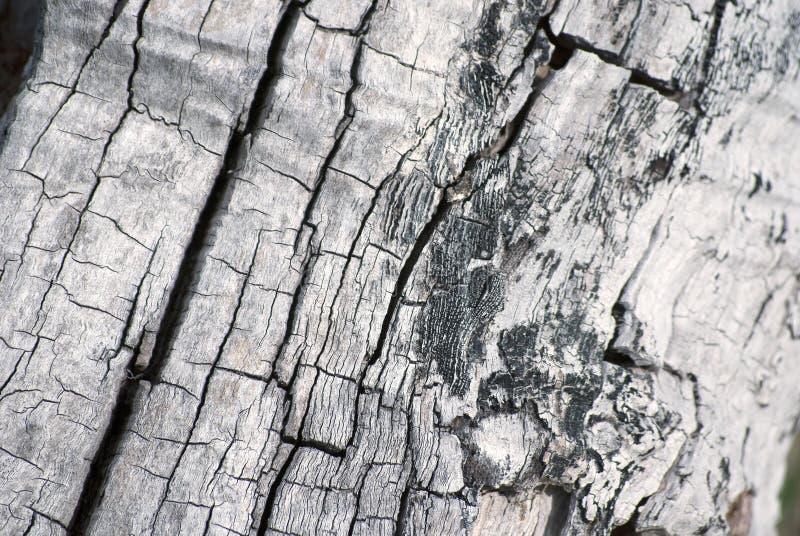 De boomstamtextuur van de boom stock afbeelding