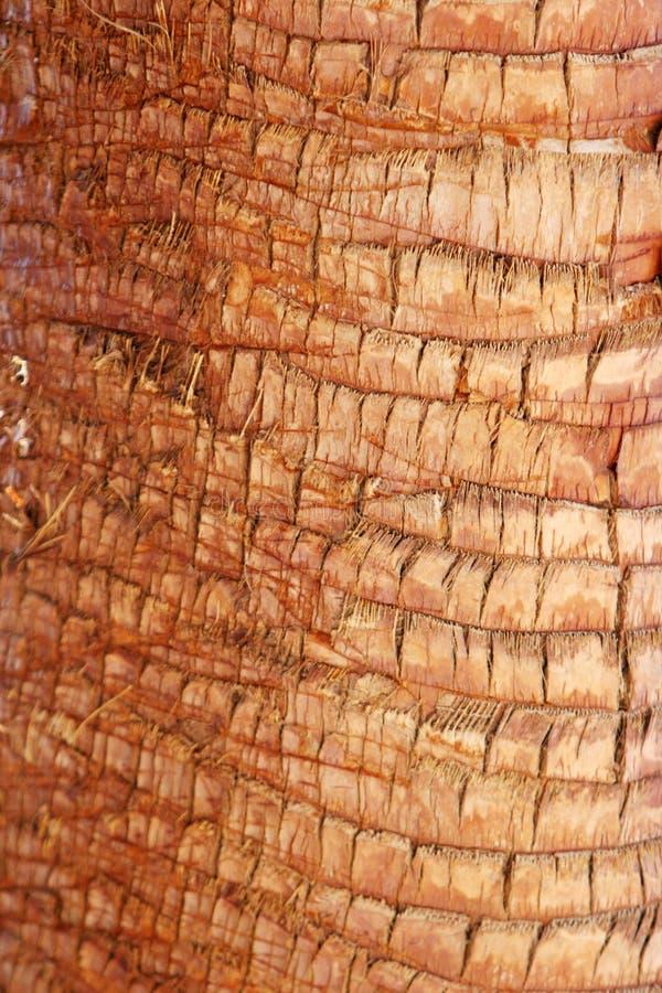 De boomstamtextuur van de boom royalty-vrije stock foto's
